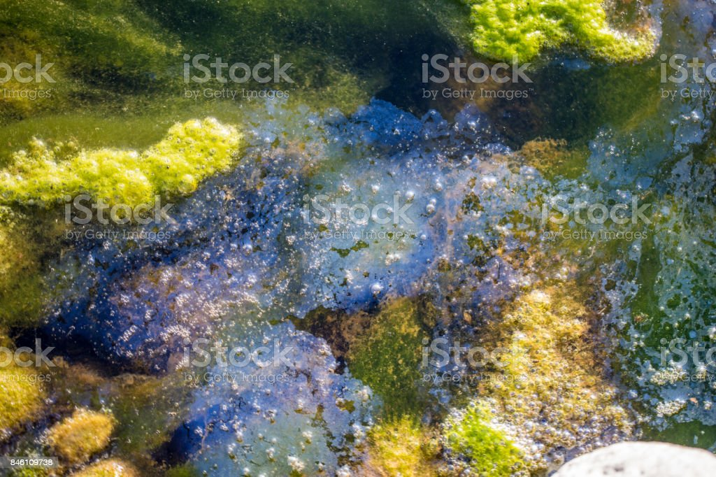 Algae in the Polluted Water stock photo