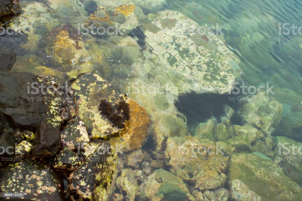 Algae on Rocks stock photo