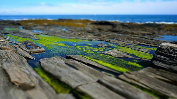 Algae, Water, Two Lights State Park Rocky Coastline, Portland, Maine stock photo