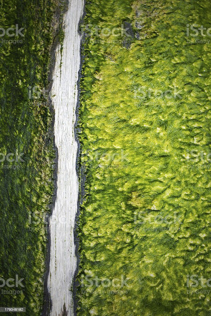 algae with wooden branch royalty-free stock photo