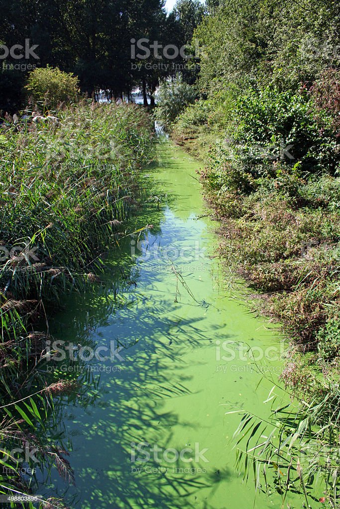 Algal bloom due to water pollution stock photo