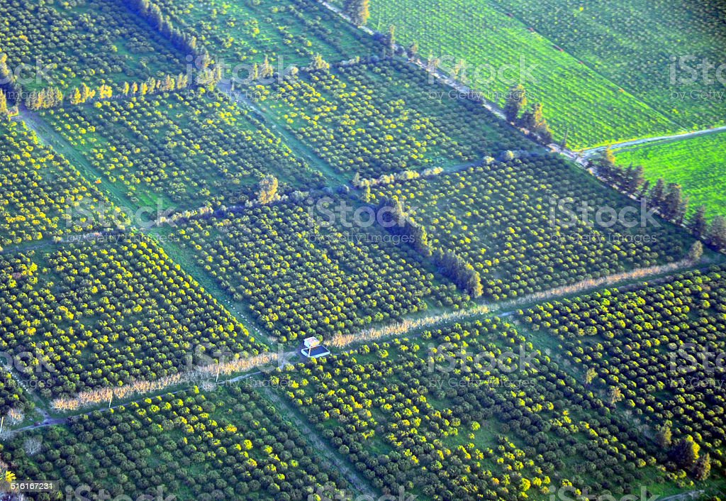 Algeria: orange orchards from the air stock photo