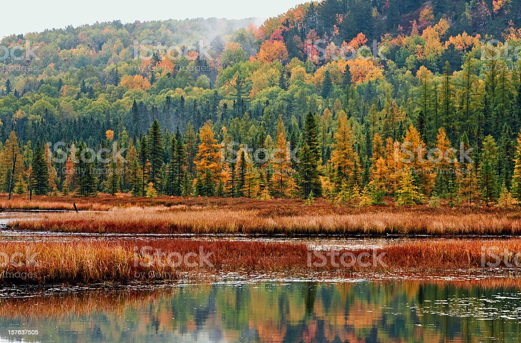 Algonquin Forest and Wetland royalty-free stock photo