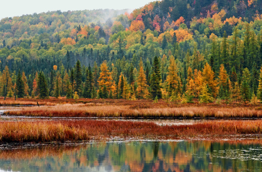 Algonquin Forest and Wetland