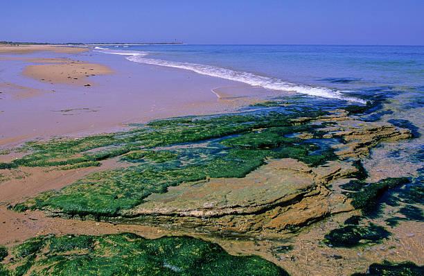 algues sur une plage stock photo