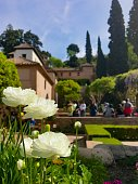 Blooming flowers in the gardens of Alhambra, Granada