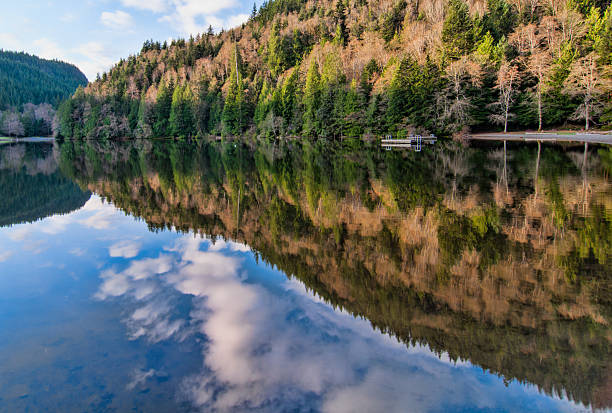 Alice Lake Forest Reflection stock photo