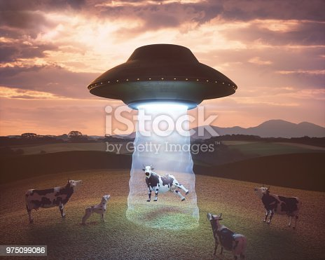 Cow on the farm being pulled by the tractor beam of the alien spacecraft.