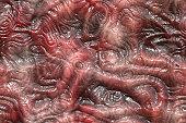 alien life form texture