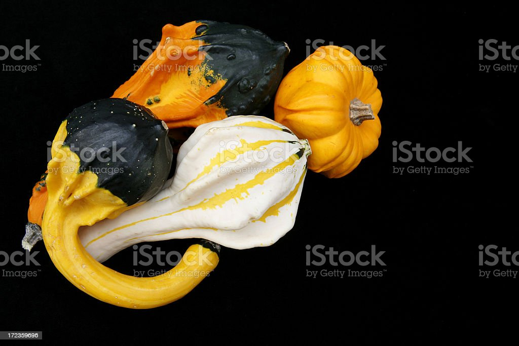 Alien Squash royalty-free stock photo