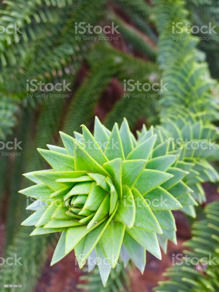 Alien tentacle stock photo