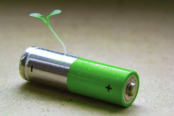 Alkaline AA battery close up with a green bore sprouted seed on a neutral background recycling battery stock photo
