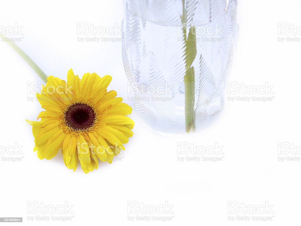 All alone - Flower sits outside of vase royalty-free stock photo