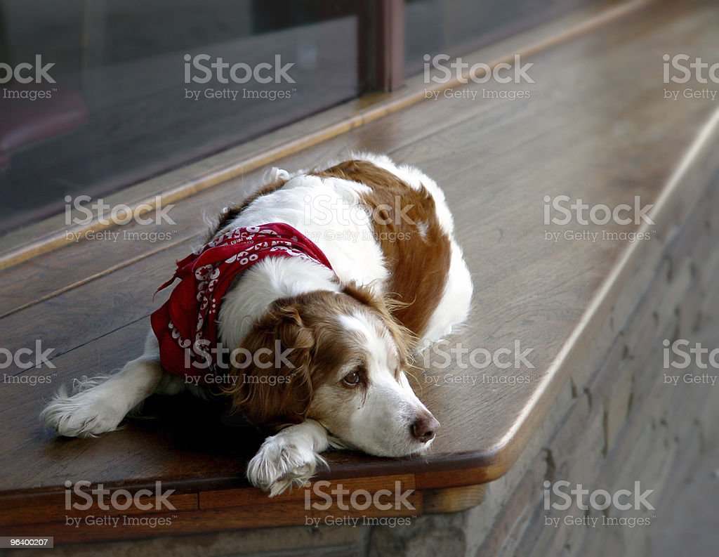 All alone - Royalty-free Animal Stock Photo