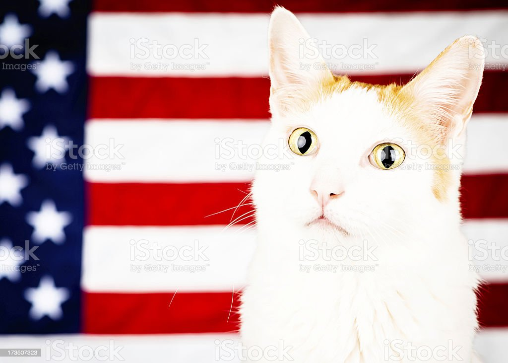 All American Kitty Cat royalty-free stock photo