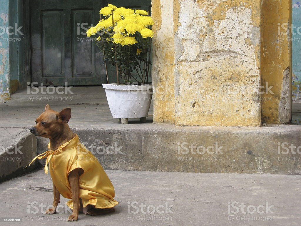 All dressed up and nowhere to go stock photo