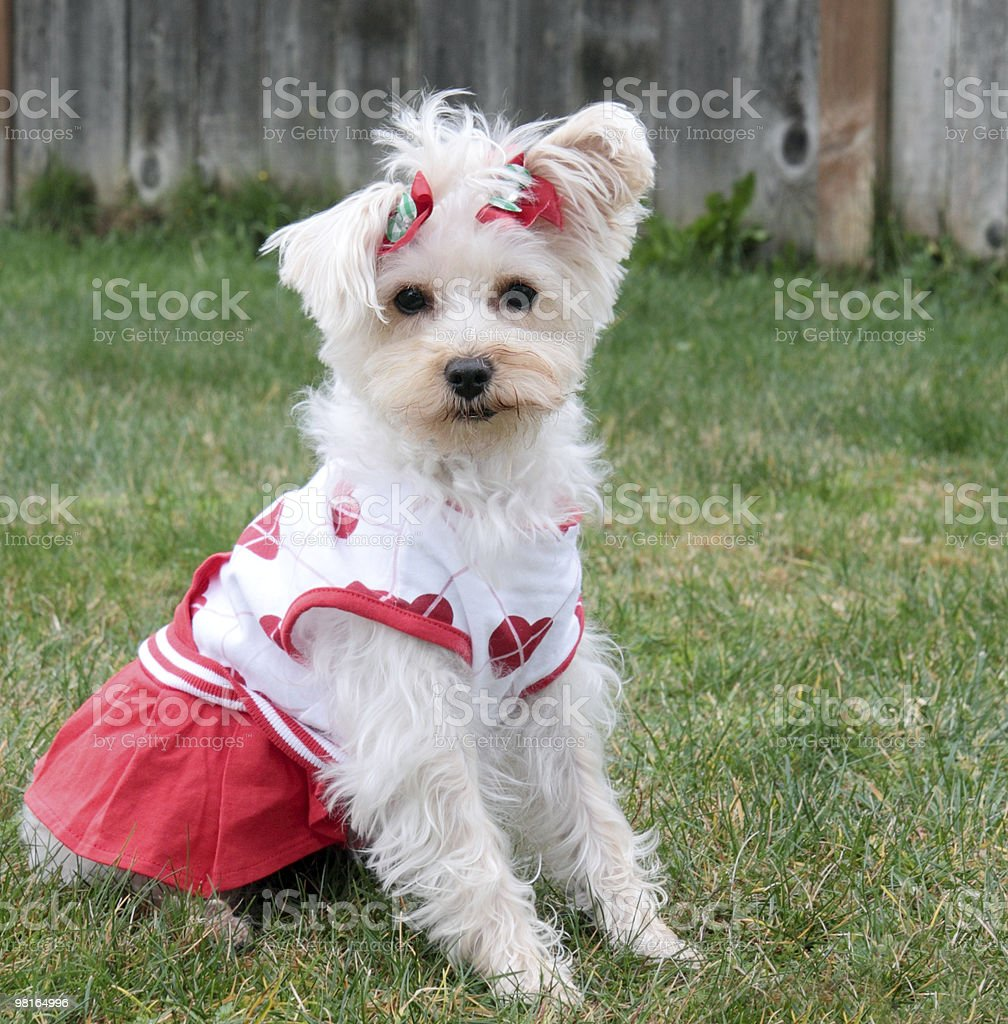 All Dressed up with Nowhere to Go royalty-free stock photo