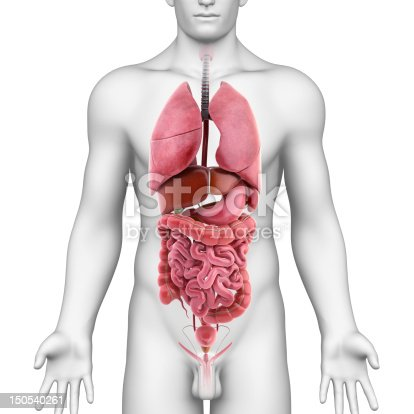 All Internal Organs Of Male Body Stock Photo More Pictures Of