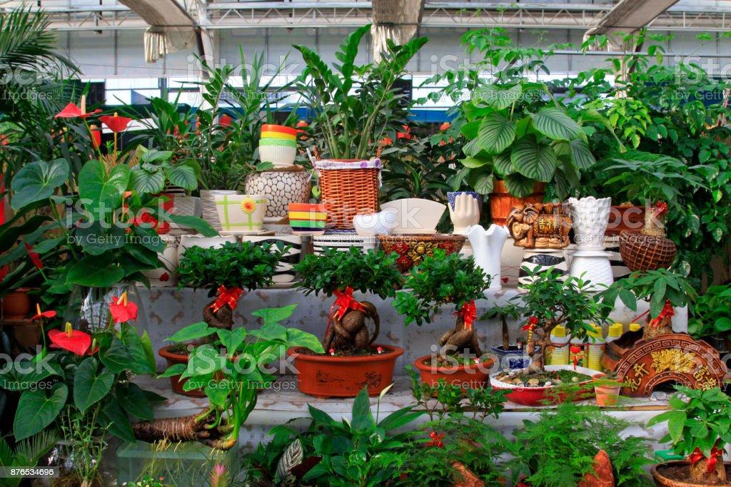 All kinds of green plants bonsai on the shelf, closeup of photo stock photo
