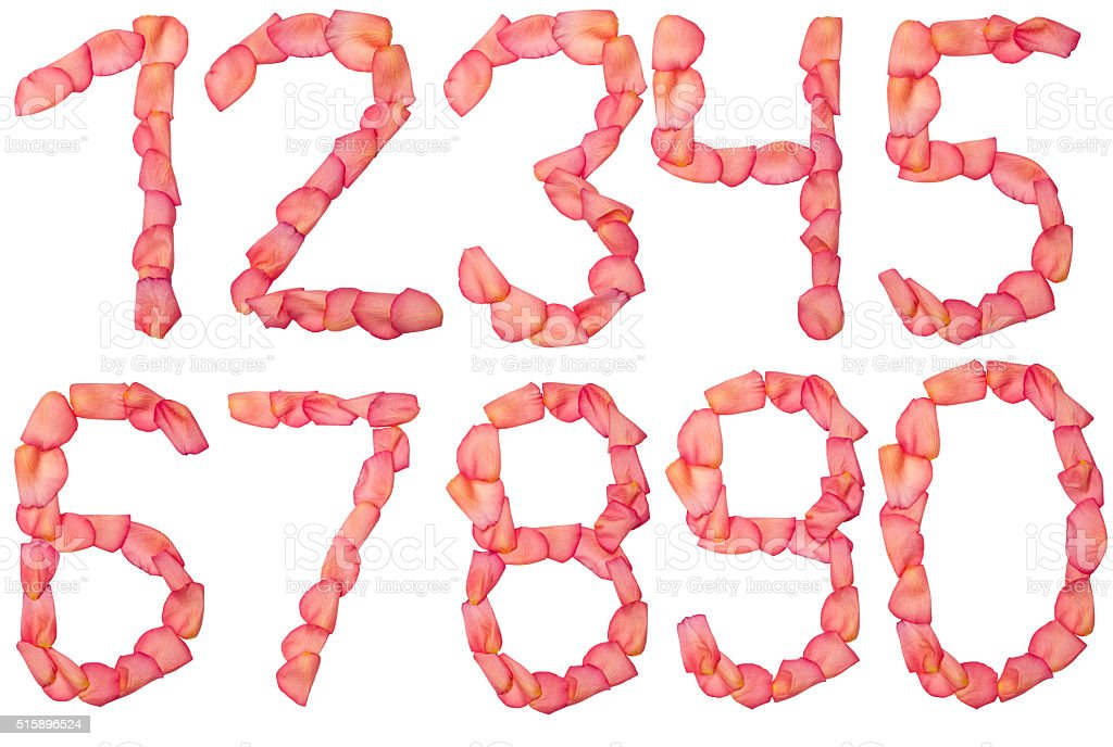 all number made of pink rose petal stock photo