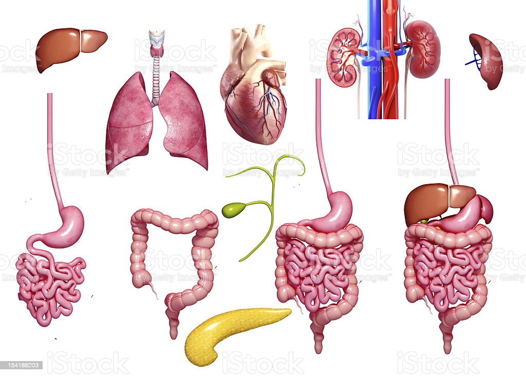 all parts of body in different  view stock photo