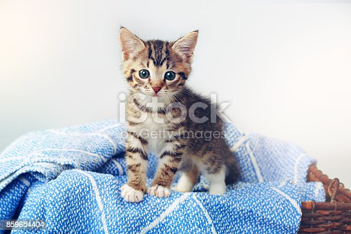 Studio shot of an adorable tabby kitten sitting on a soft blanket in a basket