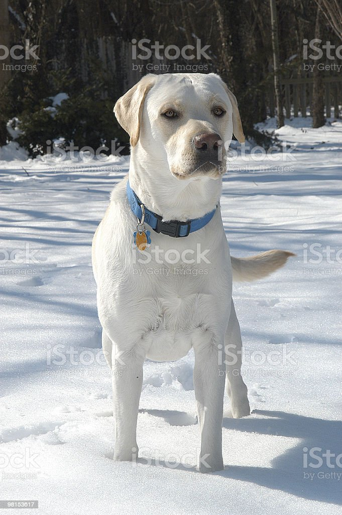 All Purebred royalty-free stock photo