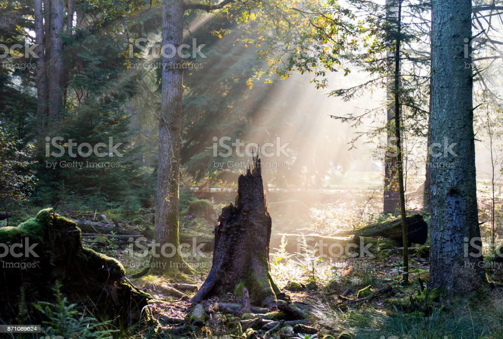 All that remains stock photo