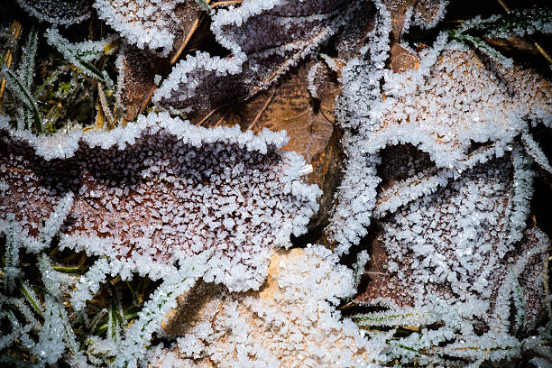 All the leaves are iced – Foto