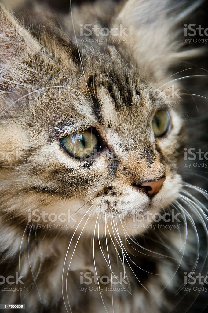 All Whiskers stock photo