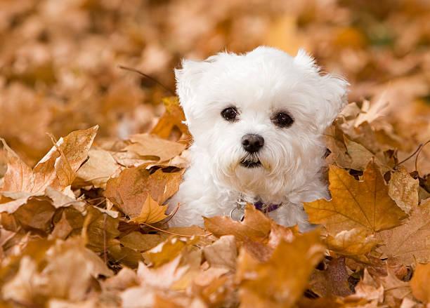 Alle in the fall leaves picture id144191172?b=1&k=6&m=144191172&s=612x612&w=0&h=ftqaph5kn9czmm9aztizqzkso785ia0unp94vh0gd2s=