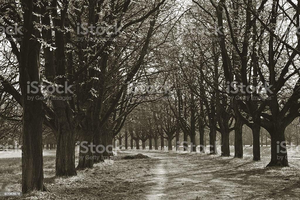Allee in black & white stock photo