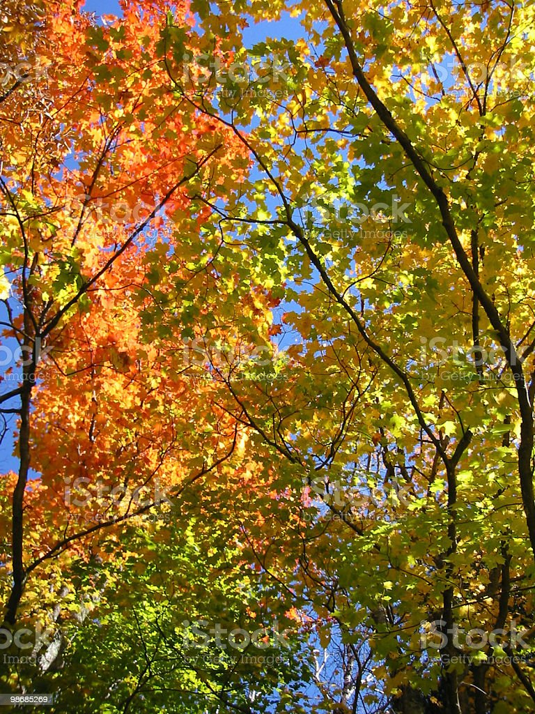 Allegro - Fall Colors Against Sky royalty-free stock photo