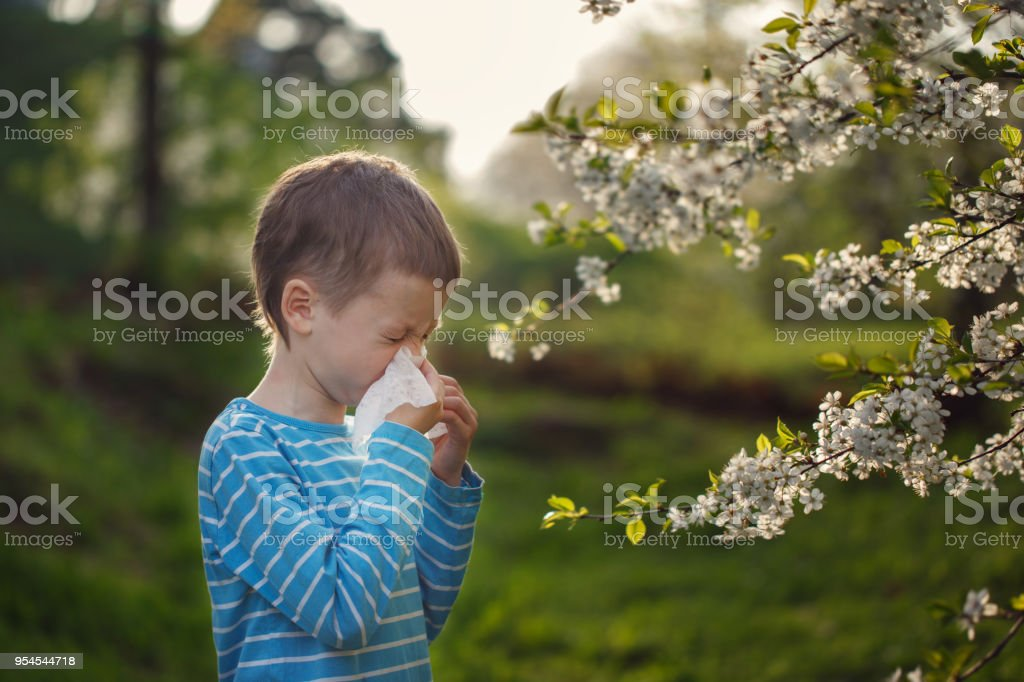 Allergy concept. Little boy is blowing his nose near blossoming...