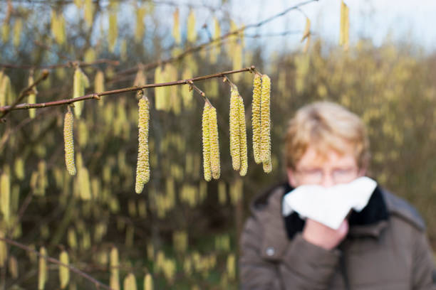 allergy - haselnut blossom - pyłek zdjęcia i obrazy z banku zdjęć
