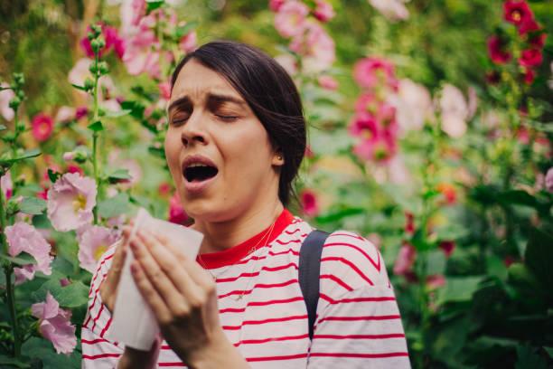 allergie - heuschnupfen stock-fotos und bilder