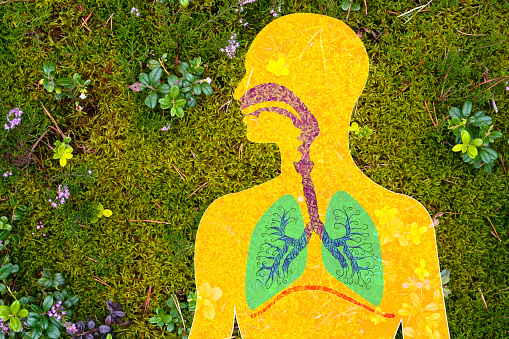 Composite illustration of lungs and airway with plants in the background.