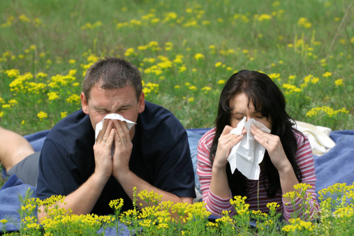 Allergy Sufferers Stock Photo - Download Image Now