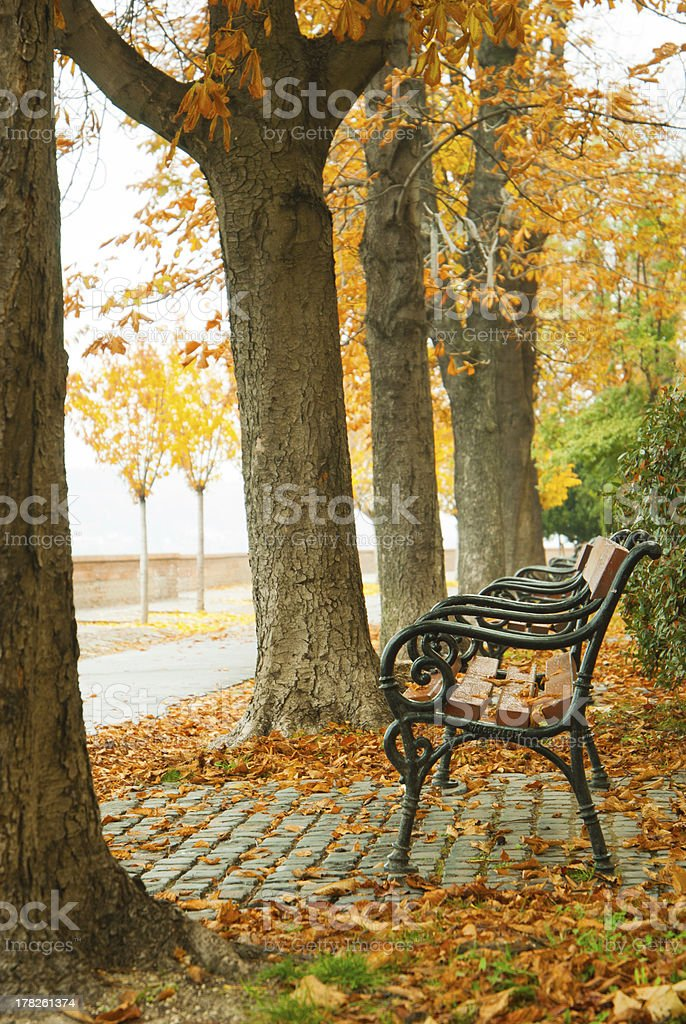 Alley at fall royalty-free stock photo