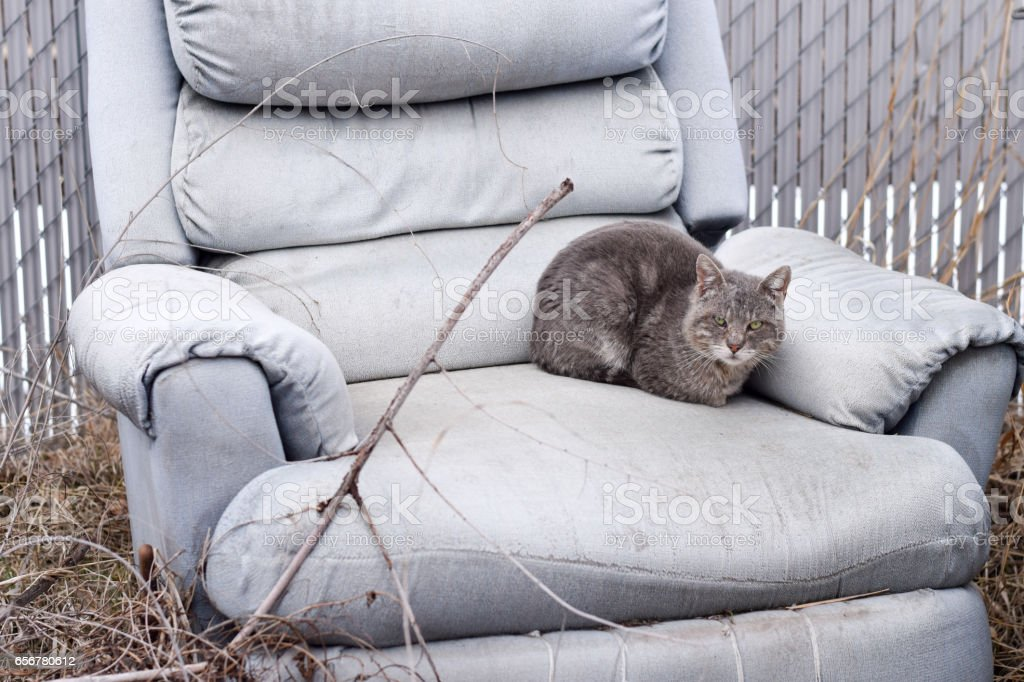 Alley cat in puffy chair stock photo