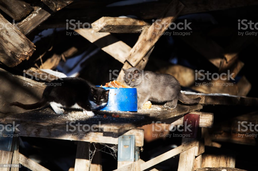 Alley cats stock photo