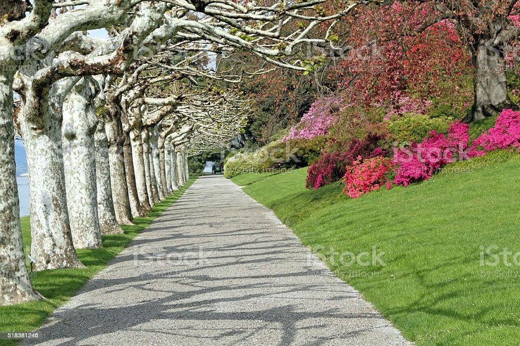 Alley in  elagant garden in springtime stock photo