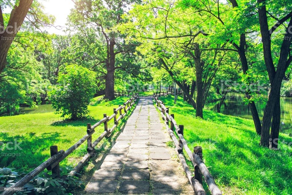 Alley in green park at sunny summer day. The footpath through the beautiful forest. stock photo