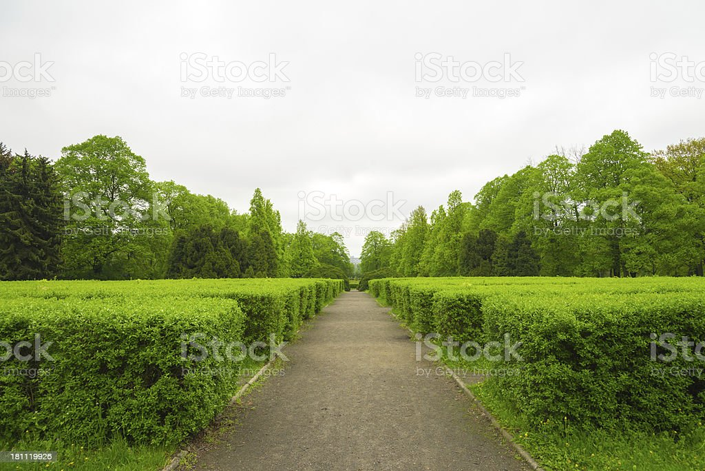 Alley in Park - 36 Mpx stock photo