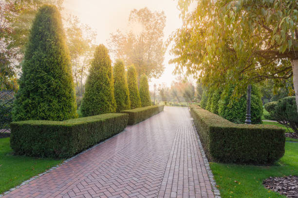 Alley in park with hedges of shaped juniper in backlight stock photo