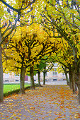 Photo taken in the German city of Bayreuth. On the photo is an alley of the autumn park in yellow tones.