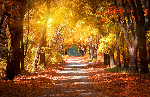 Alley in the autumn park