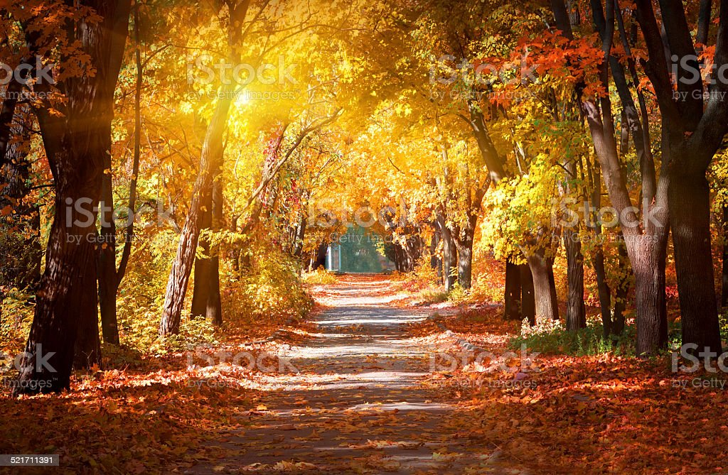 Alley in the autumn park stock photo