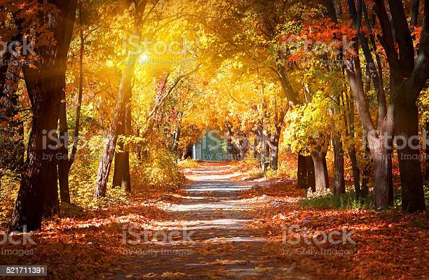 Photo of Alley in the autumn park