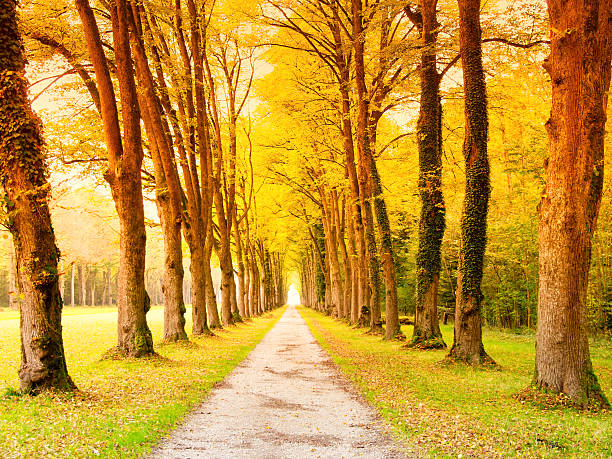 alley in the park stock photo
